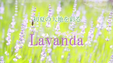 初夏の大地を彩るラベンダー・ラベンダー製品一覧