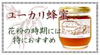 花粉の季節におすすめ!ユーカリ蜂蜜