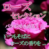 バラが咲き誇る5月・いつもそばにローズの香りを・ローズセレクション