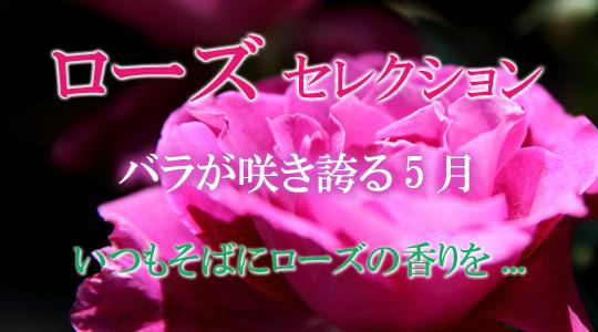 バラの咲き誇る5月・いつもそばにローズの香りを・ローズセレクション